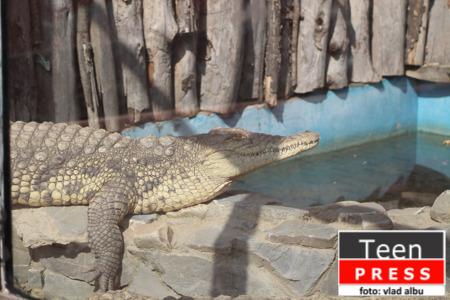 Fotoreportaj - Gradina Zoologica Bucuresti